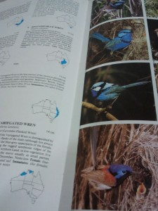 Wrens from Trounson's Australian Birds (2nd ed., 1989, PR Books, Frenchs Forest N.S.W., p. 109).