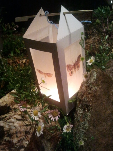 Handmade lantern with swamp daisies