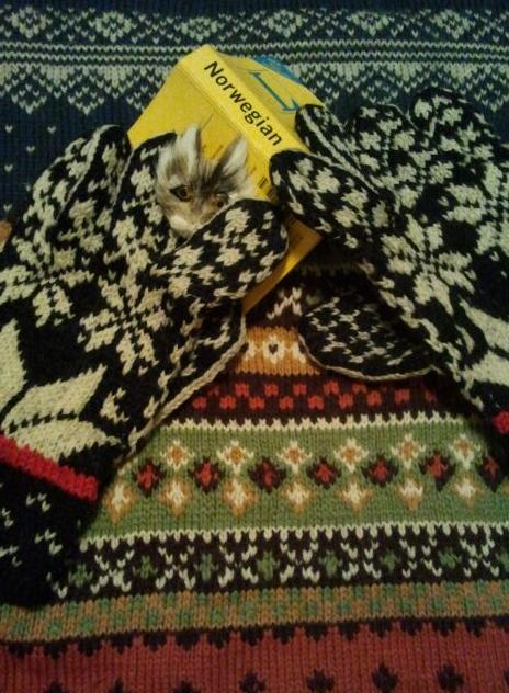 Norwegian sweater by my Farmor, gloves I bought from a Laplander, requisite Norsk dictionary and a little wolf (it had a nose but the cats ate it).