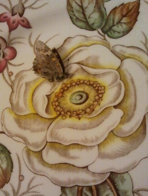The butterfly and rose were shocked to discover that neither seemed as they had appeared. Darn internet dating!