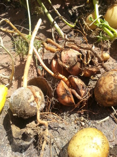 Avocado crop 2014