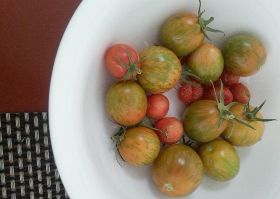 Tomato crop 2014
