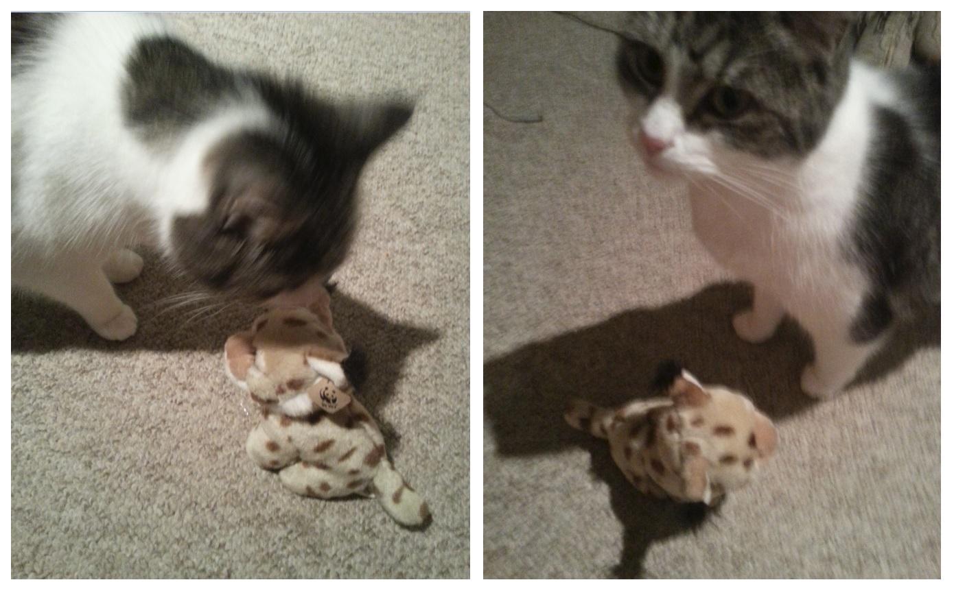 Mr Cat and friend